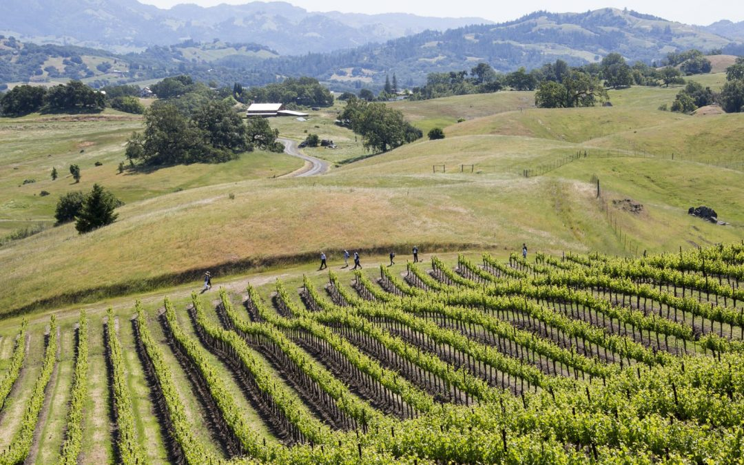 Jordan Winery Reopens with More Hikes, More Picnics and a New Food & Wine Pairing Lunch